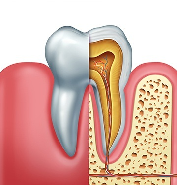 Animaiton of layers of tooth